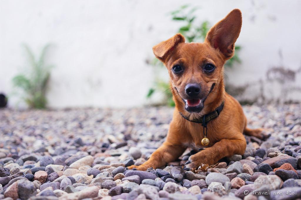 Cute dog smiling on rocks